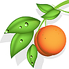 Vector clipart: orange peach