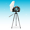 Vector clipart: parrot and camera