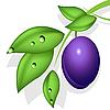 Vector clipart: plum
