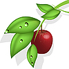 Vector clipart: red apple