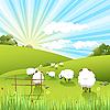 Vector clipart: sheeps