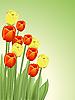 Vector clipart: tulips
