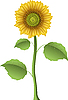 Vector clipart: sunflower