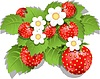 Vector clipart: strawberry bush