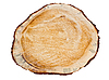 Photo 300 DPI: Cross section of pine tree