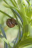 ID 3098659   Snail   High resolution stock photo   CLIPARTO