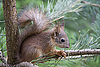 Young squirrel | Stock Foto