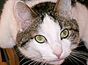 ID 3109275   Green-eyed cat   High resolution stock photo   CLIPARTO