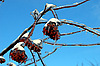 Tree branches with berries in ice and snow | Stock Foto