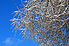 Tree branches in snow and ice | Stock Foto