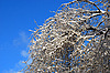 Tree branches in snow | Stock Foto