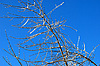 Tree branches in ice | Stock Foto