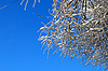 Tree branches in ice and snow | Stock Foto