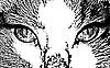 Векторный клипарт: кот лицо крупным планом