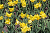 ID 3122987 | Flower background of tulips | High resolution stock photo | CLIPARTO