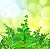 Vector clipart: Green spring background with grass and blurry light