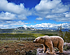 Mountain landscape with bear | Stock Foto