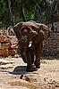 Photo 300 DPI: elephant at zoo