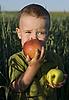 Chłopiec z pysznych jabłek | Stock Foto