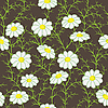 Vector clipart: floral pattern with camomiles