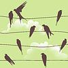 Nahtlose Muster mit Vögeln an Drähten