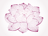 Vector clipart: lotus flower