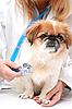의사 및 작은 개 | Stock Foto