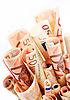 Euro money | Stock Foto