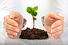 ID 3107378   Small plant in hands   High resolution stock photo   CLIPARTO