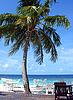 马尔代夫海滩 | 免版税照片