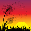 Vector clipart: sunset