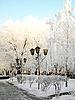 Frosty day | Stock Foto