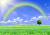 Grünes Gras, Regenbogen und blauer Himmel | Stock Photo