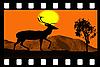 Photo 300 DPI: Deer going on sunset