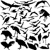 Photo 300 DPI: Set of birds
