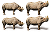 Nashorn | Stock Foto