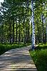 나무 산책 길   Stock Foto