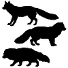 Vector clipart: silhouettes of polar fox, badger and red fox