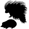 Vector clipart:  silhouette of the hedgehog and porcupine