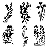 Vector clipart:  silhouettes of the medicinal plants