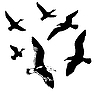 Vector clipart:  silhouettes flying birds