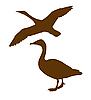 Vector clipart:  silhouette goose