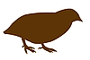 Vector clipart:  silhouette of the quail