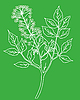 Vector clipart:  silhouette of the plant on green