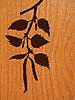 Vector clipart: silhouette of birch branch on wood