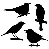 Vector clipart:  silhouettes of the birds sitting on branch tree