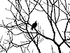 Vector clipart:  silhouette starling on tree