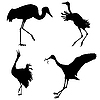 Vector clipart:  silhouettes of the cranes