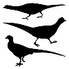 Vector clipart: silhouettes of the pheasants
