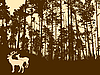 Vector clipart:  silhouette of the deers in thick wood